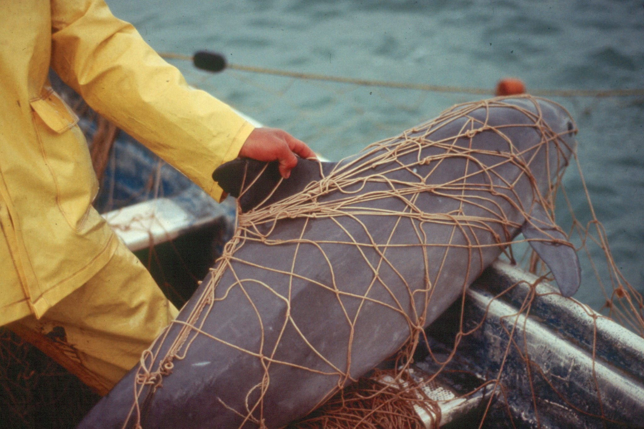 Photo by Omar Vidal
